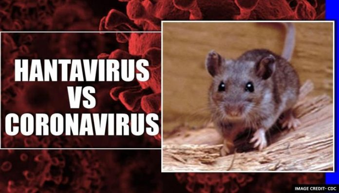 Hantavirus vs Coronavirus