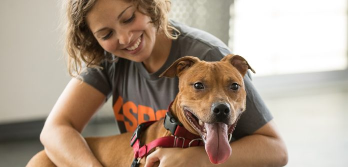 adopting animals