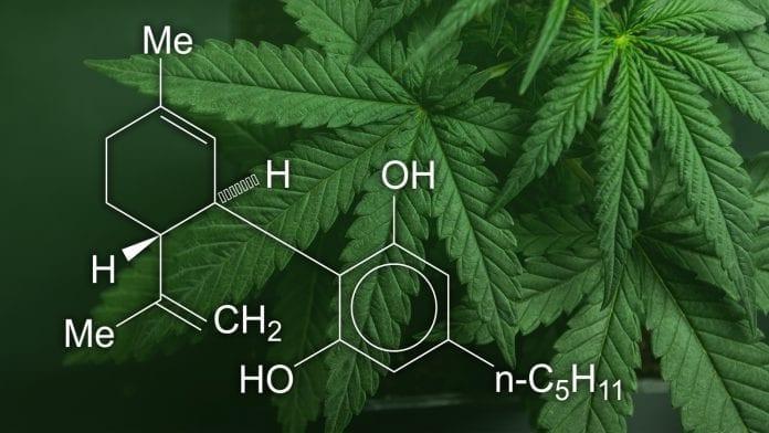 CBD Cannabis Industry