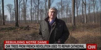 The ancient trees bringing Notre Dame back to life